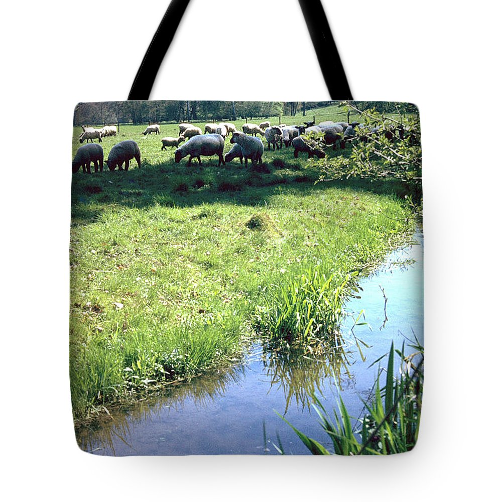Sheep Tote Bag featuring the photograph Sheep by Flavia Westerwelle