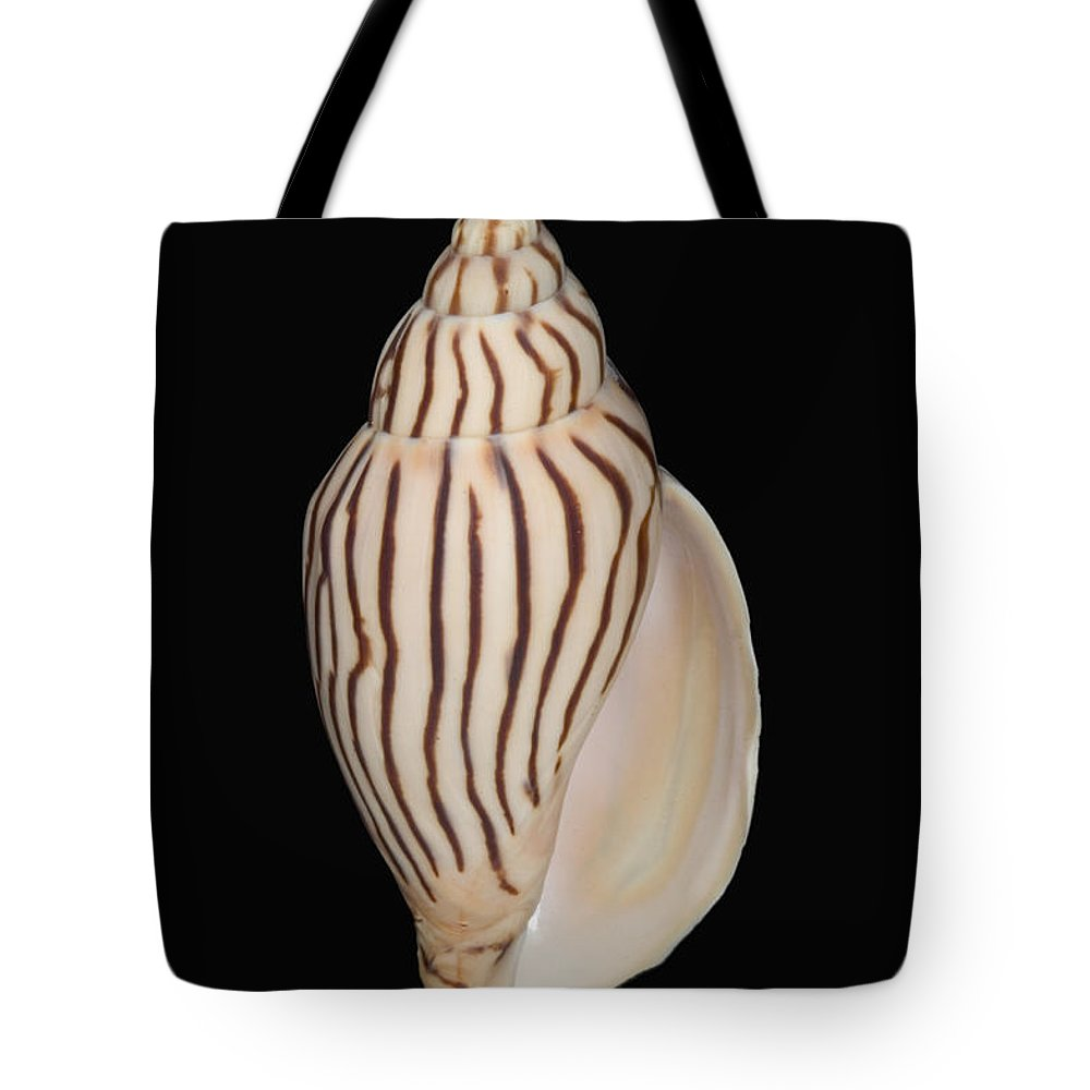 76-pfs0002 Tote Bag featuring the photograph Shell Pattern - Bw by Bill Brennan - Printscapes
