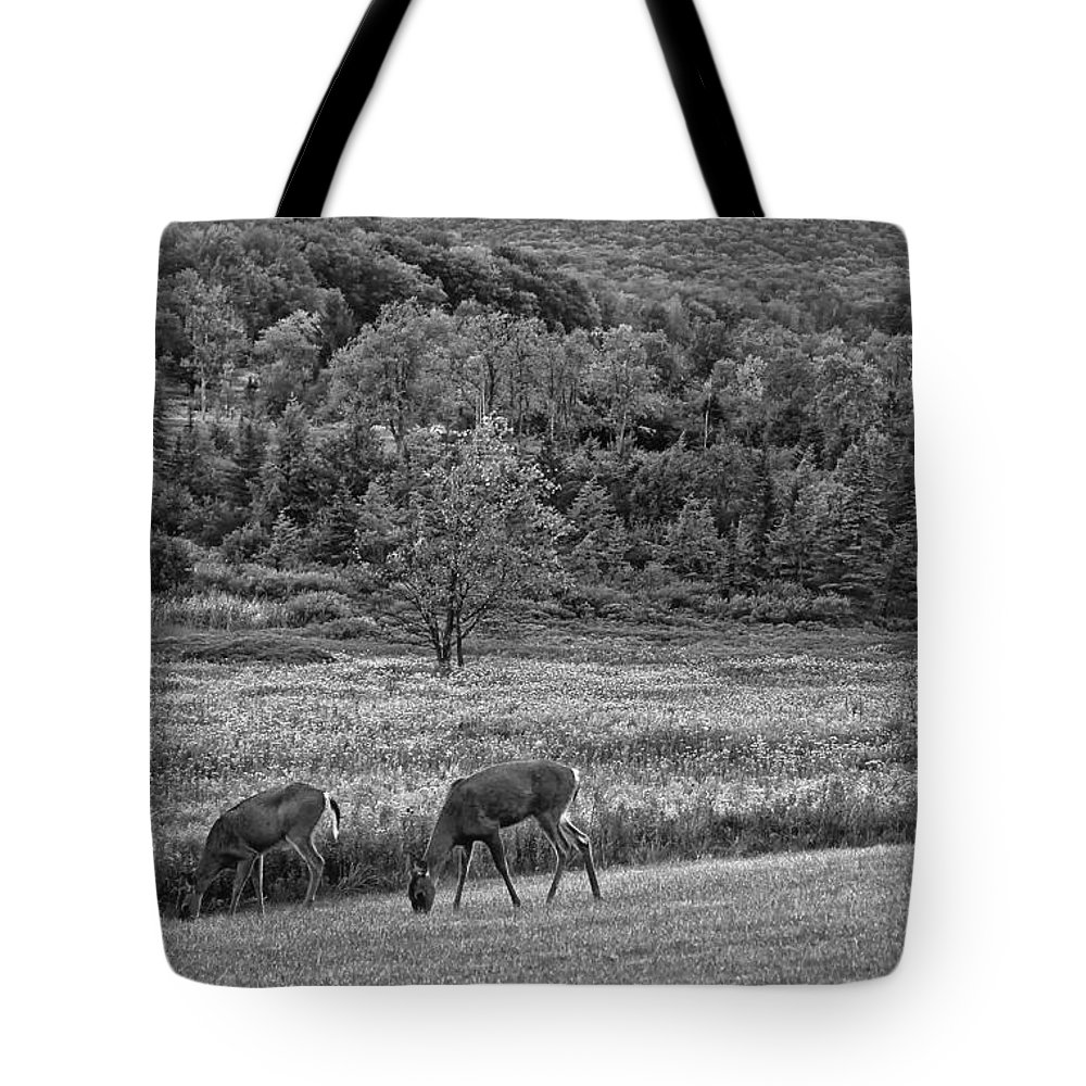 Canaan Valley Tote Bag featuring the photograph Shh... Bw by Steve Harrington