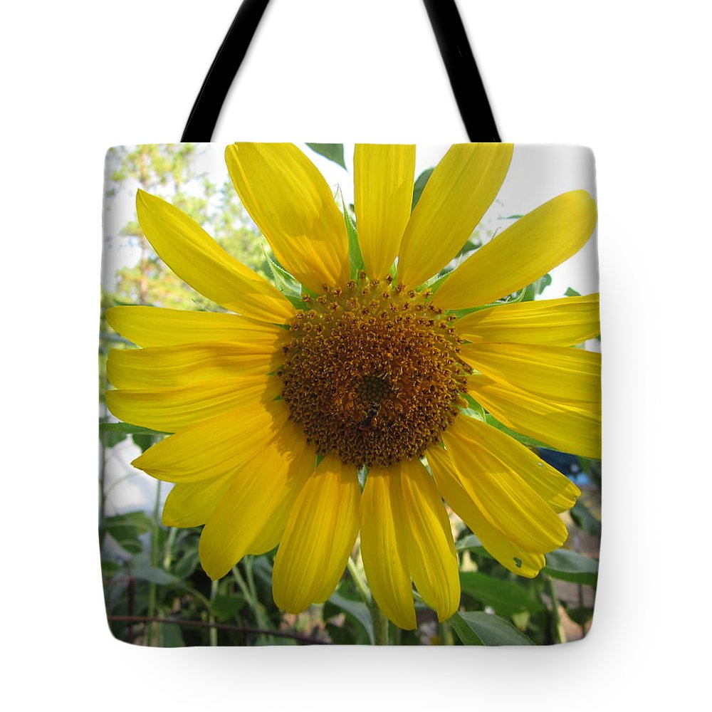 Sunflower Tote Bag featuring the photograph Shine Sunflower Shine by David Sutter