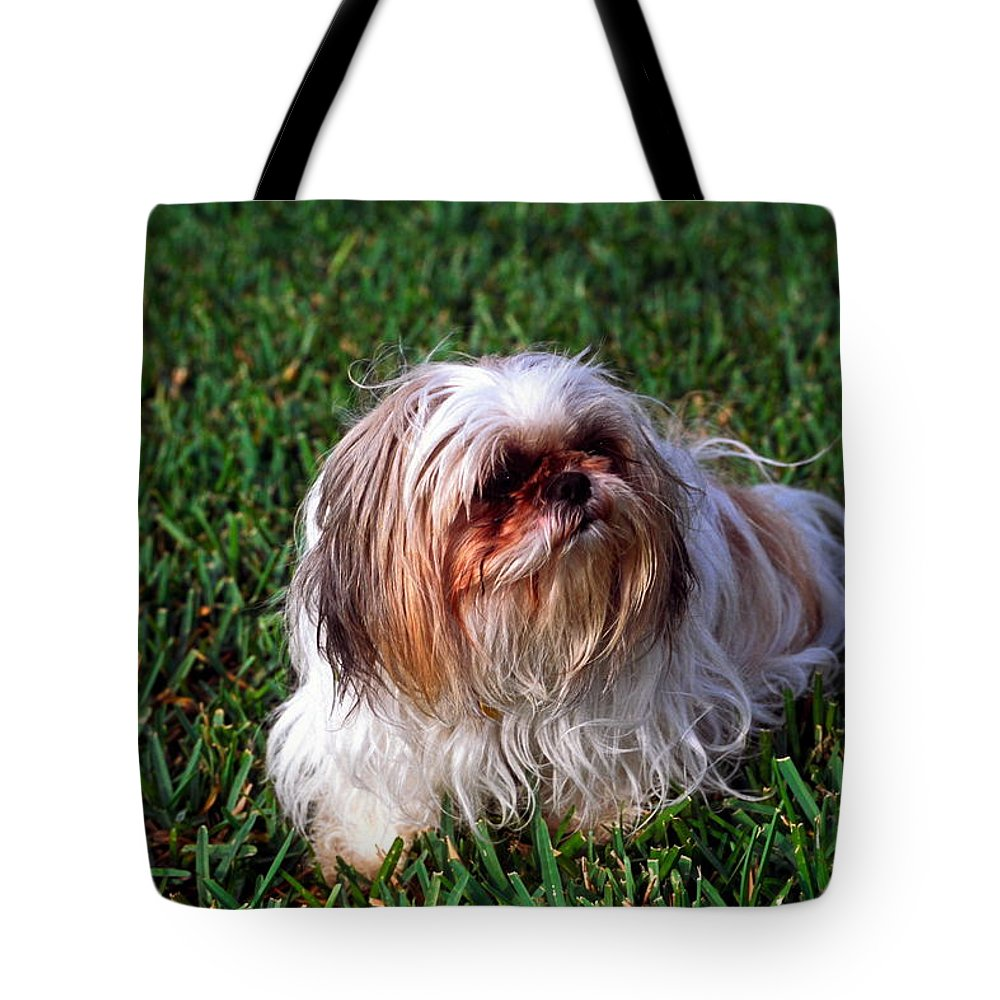 Shitzu Dog On Grass: Tote Bag featuring the photograph Shitzu Dog by Sally Weigand