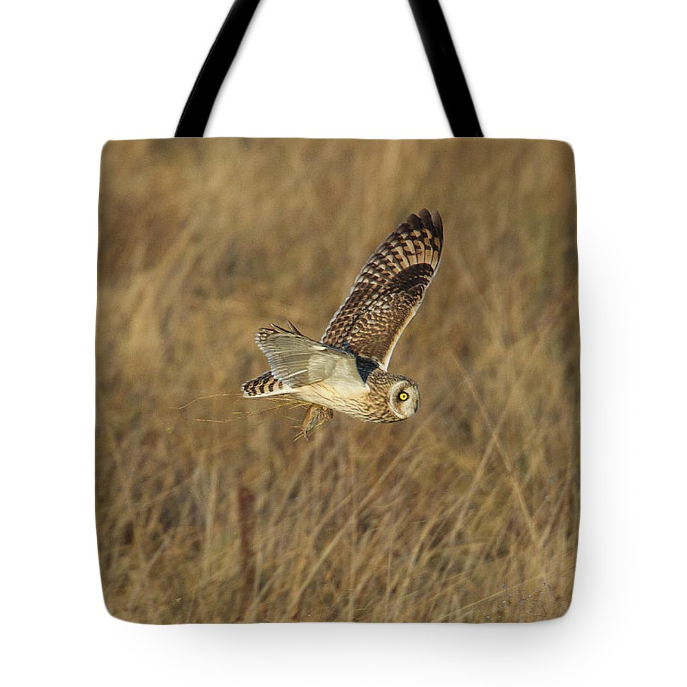 Birds Tote Bag featuring the photograph Short-eared Owl With Vole by Bob Kemp
