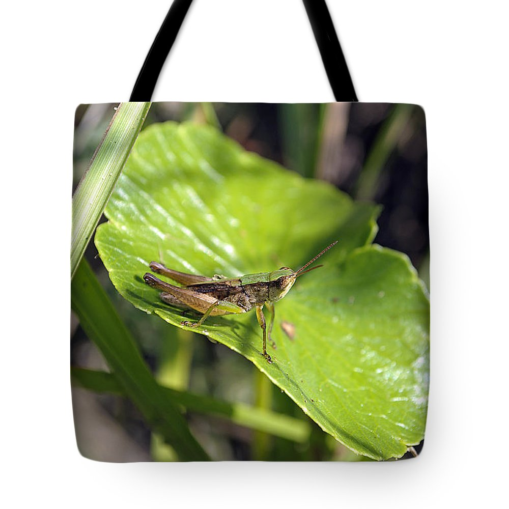 Grasshopper Tote Bag featuring the photograph Short Winged Green Grasshopper by Kenneth Albin