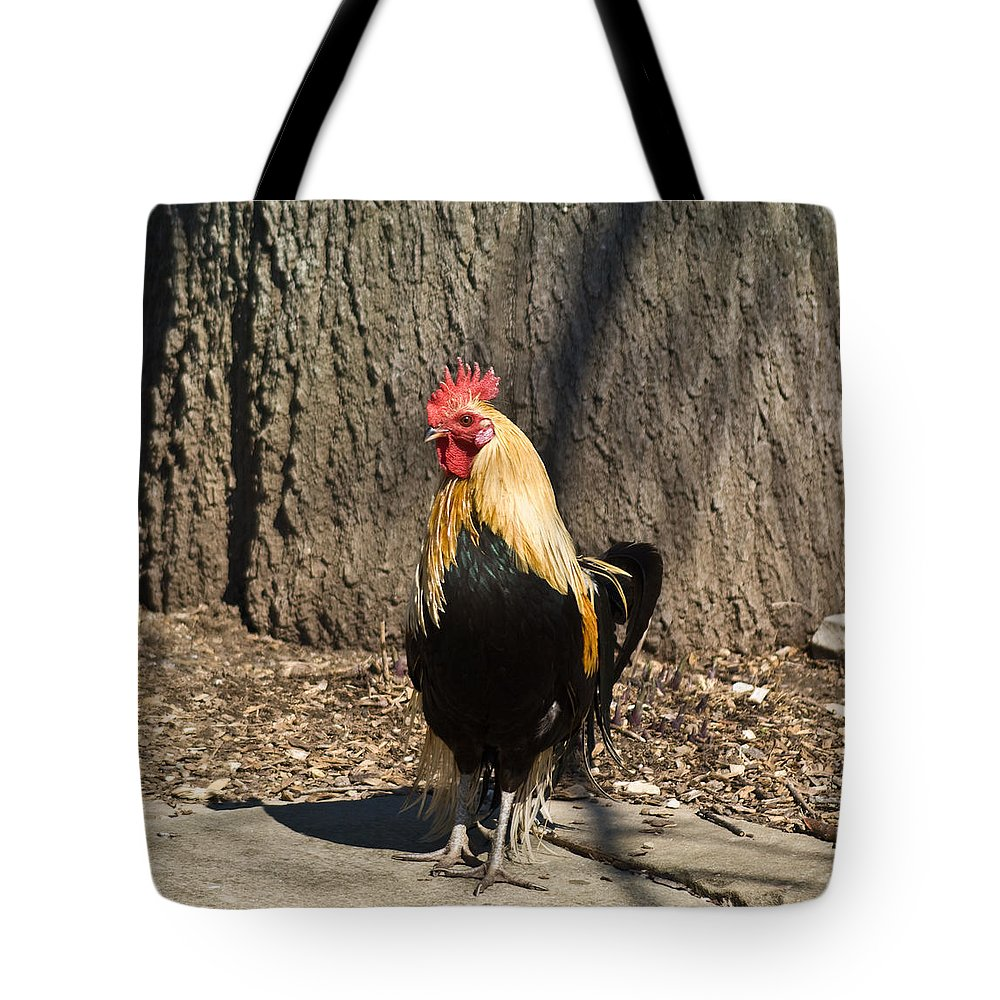Rooster Tote Bag featuring the photograph Showy Rooster Posed by Douglas Barnett