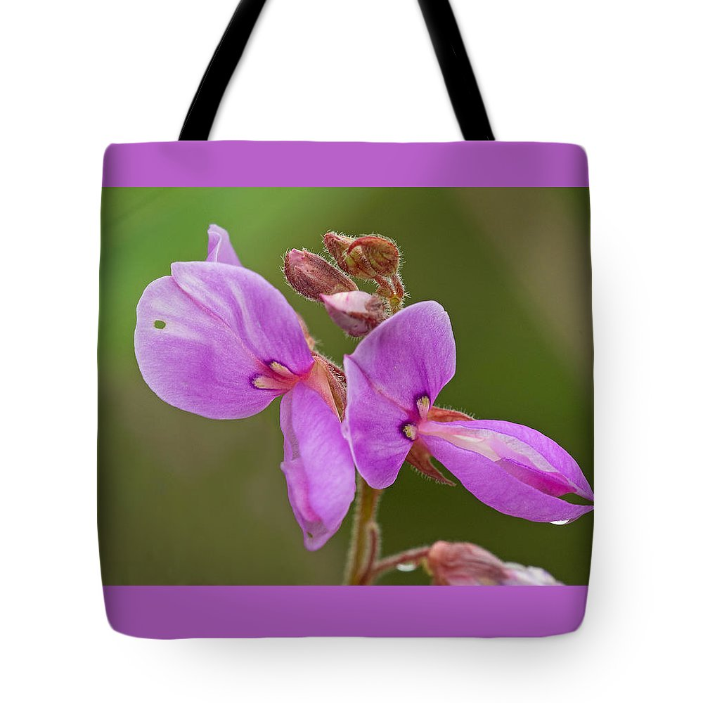 Desmodium Canadense Tote Bag featuring the photograph Showy Tick Trefoil by Jim Zablotny