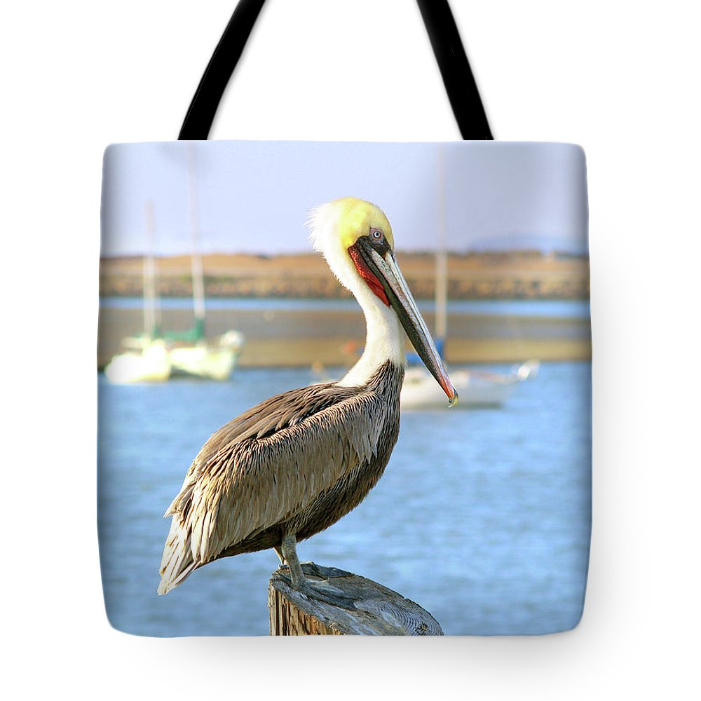 Brown Pelican Tote Bag featuring the photograph Shy Brown Pelican by Haleh Mahbod