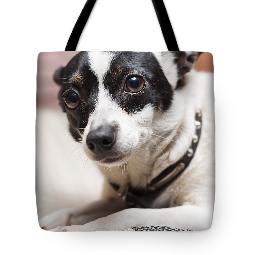 Dog Tote Bag featuring the photograph Shy Lonely Mini Fox Terrier Dog Laying On A Bed by Jorgo Photography - Wall Art Gallery