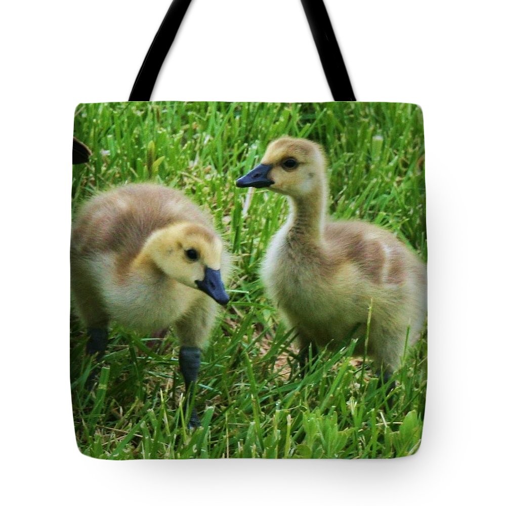 Nature Tote Bag featuring the photograph Siblings by Angus Hooper Iii