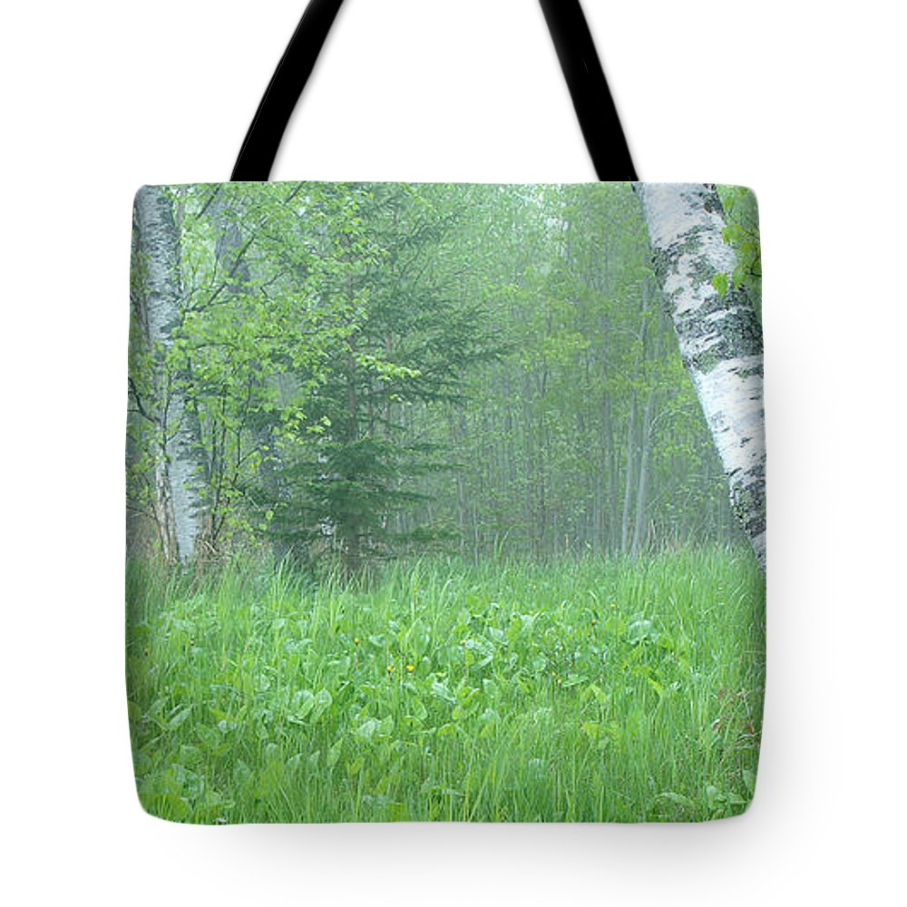 Landscape Tote Bag featuring the photograph Silent Birch by Bill Morgenstern