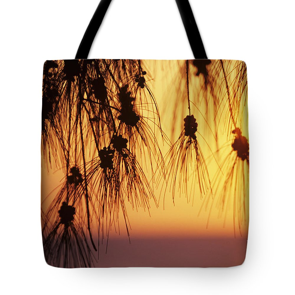 Beautiful Tote Bag featuring the photograph Silhouettes by Rita Ariyoshi - Printscapes