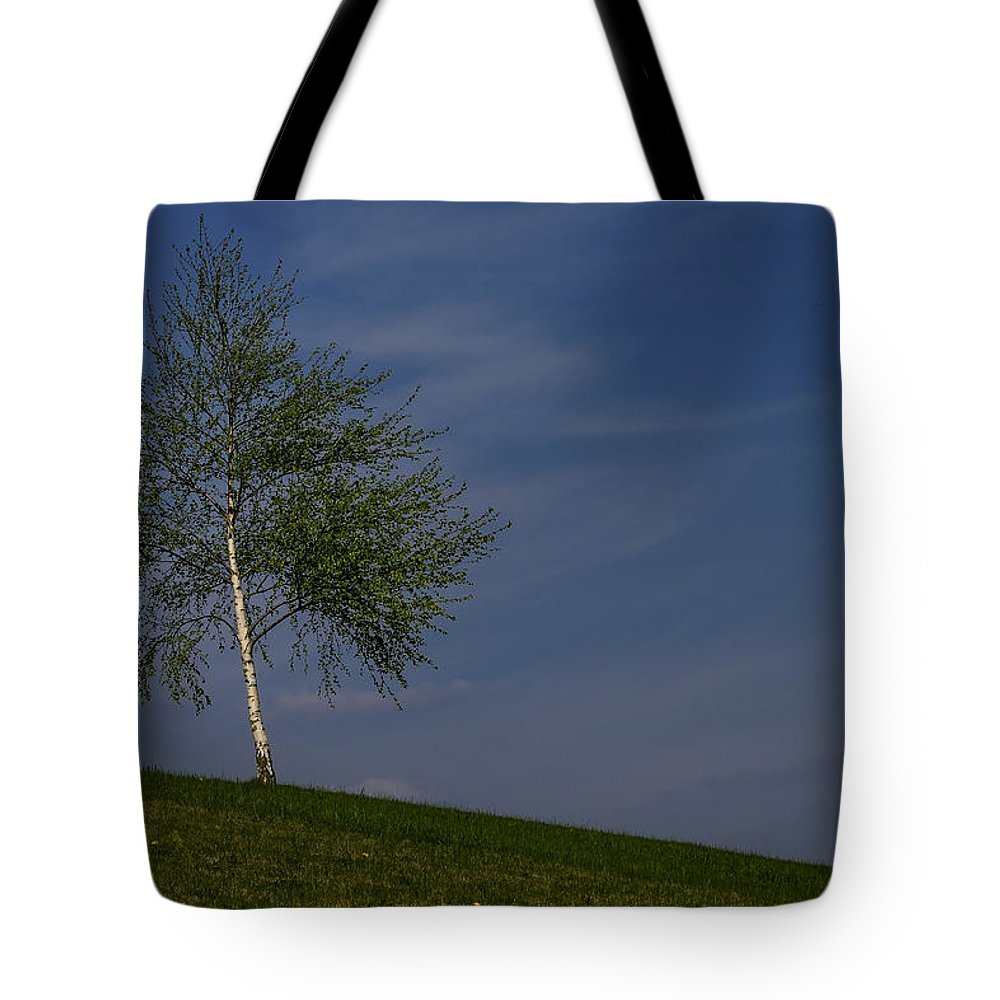 Betula Tote Bag featuring the photograph Silver Birch Tree by TouTouke A Y