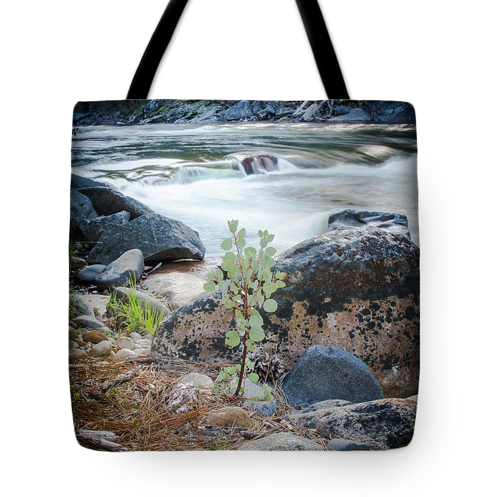 River Tote Bag featuring the photograph Silver Fork Manzanita by Wes Jimerson