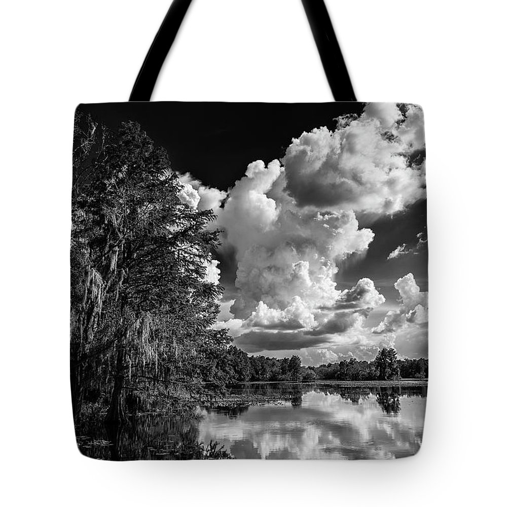 Bald Cypress Photographs Tote Bags
