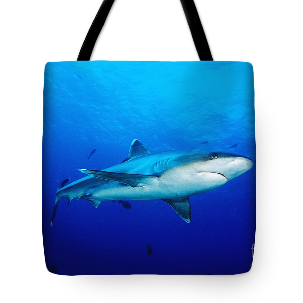 Above Tote Bag featuring the photograph Silvertip Shark In Thailand by Dave Fleetham - Printscapes