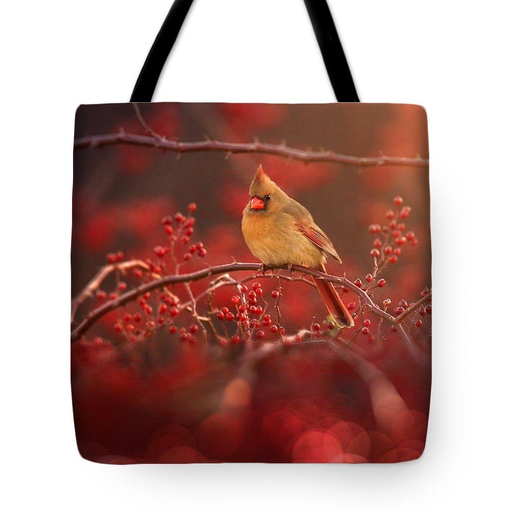 Female Cardinal Photographs Tote Bags