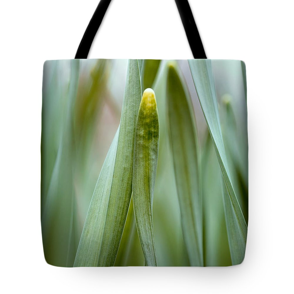 Grass Tote Bag featuring the photograph Single Blade Of Onion Grass Leaning - Color Version by S R Shilling