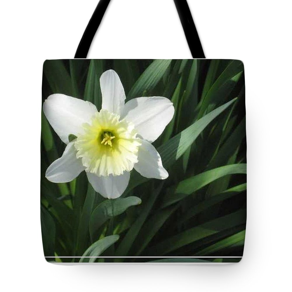 Spring Tote Bag featuring the photograph Single Daffodil by Paula Laschenski SNDdeN