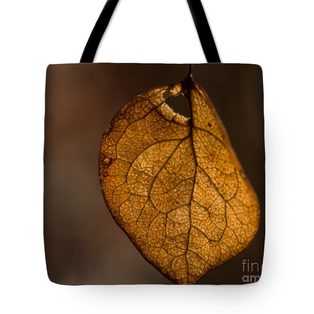 Leaf Tote Bag featuring the photograph Single Fall Leaf by Alissa Beth Photography