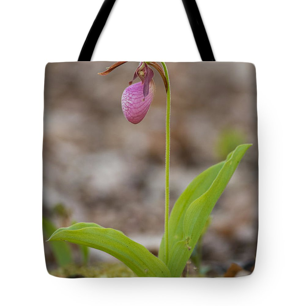 Spring Tote Bag featuring the photograph Single by Joye Ardyn Durham