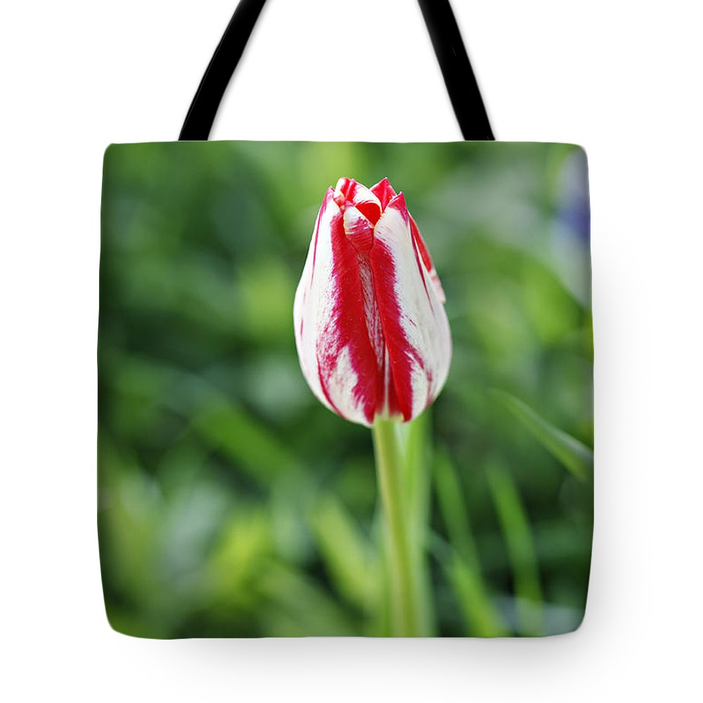 Flower Tote Bag featuring the photograph Single Lovely Tulip by Marilyn Hunt