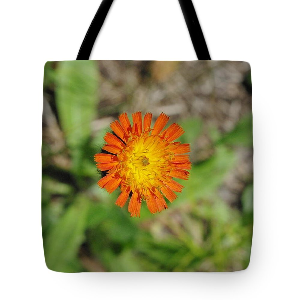 Floral Tote Bag featuring the photograph Single Orange Wild Flower by Alice Markham