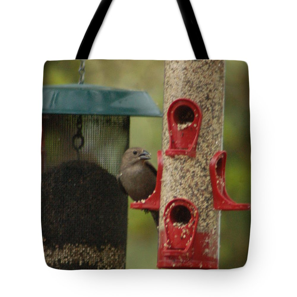Songbird Tote Bag featuring the photograph Single Songbird At Feeder by Wilbur G Smith