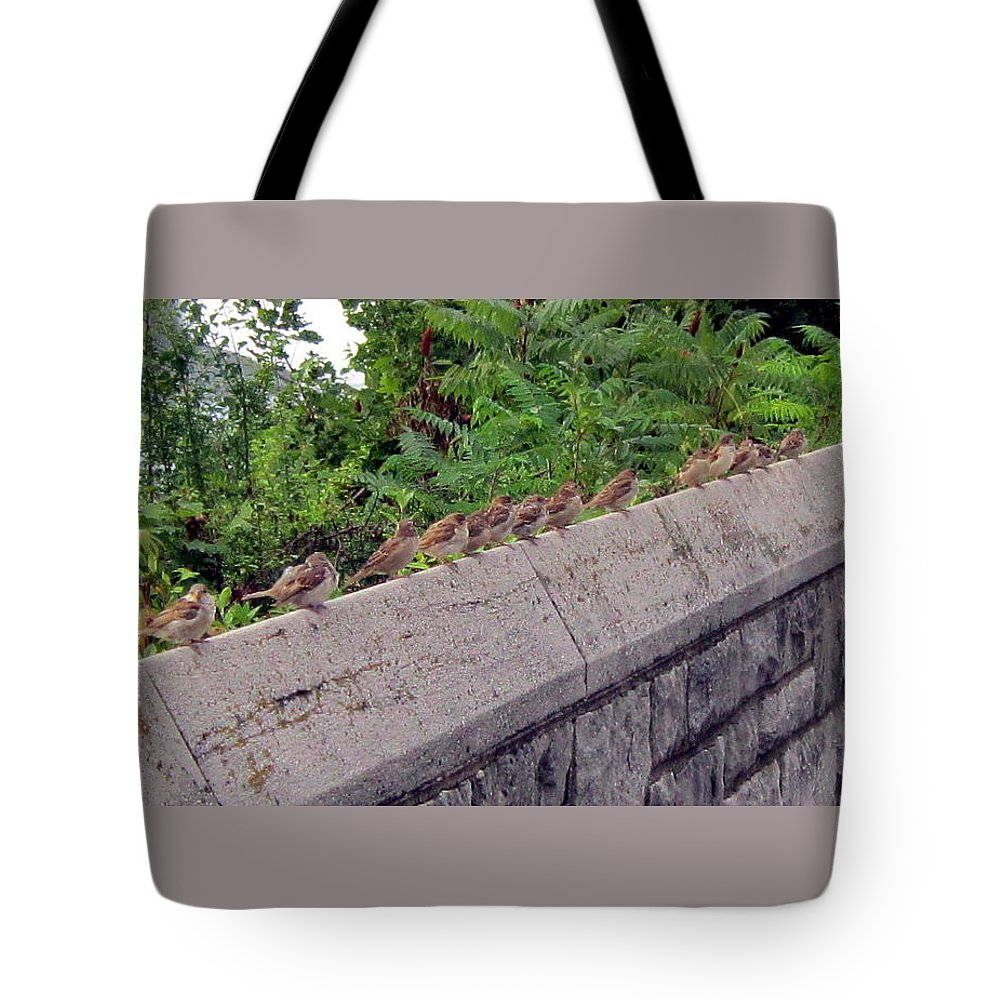 Birds Tote Bag featuring the photograph Sitting On A Ledge by Abby Humphries