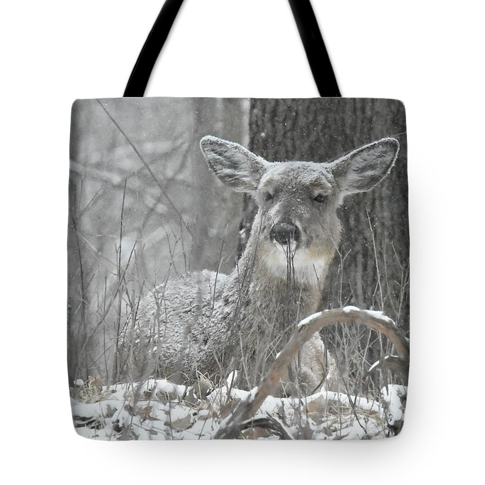 Deer Tote Bag featuring the photograph Sitting Out The Storm by Michael Peychich