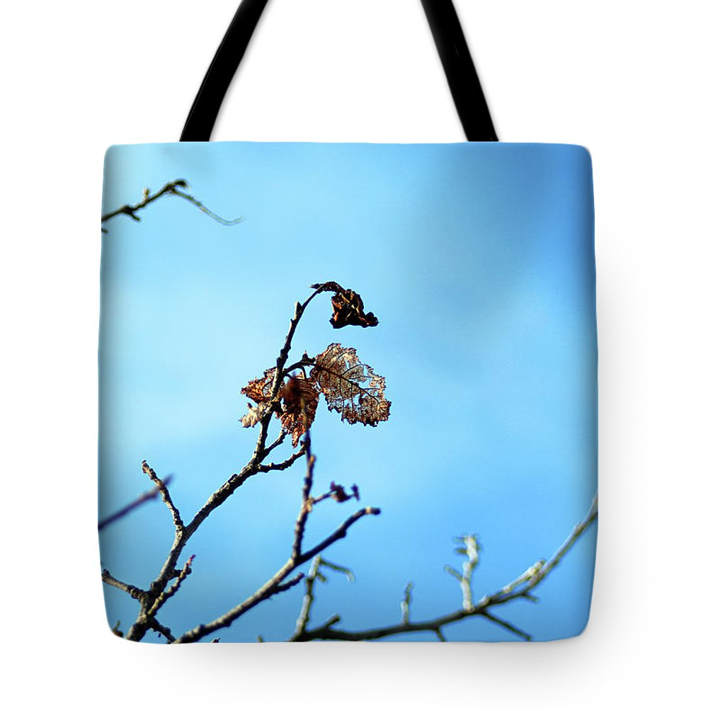 Leaf Tote Bag featuring the photograph Skeletons by Gralyn Haller