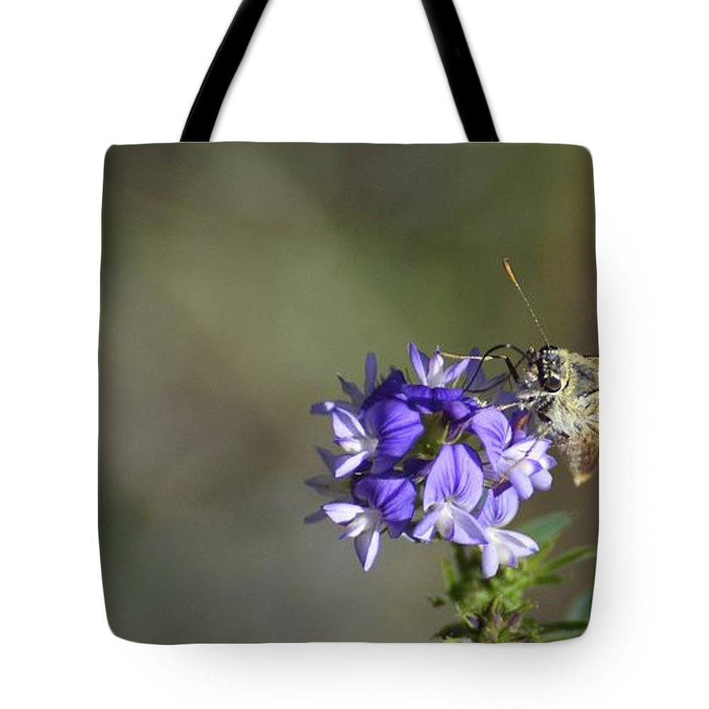 Moth Tote Bag featuring the photograph Skimming Skipperling by Omer Vautour
