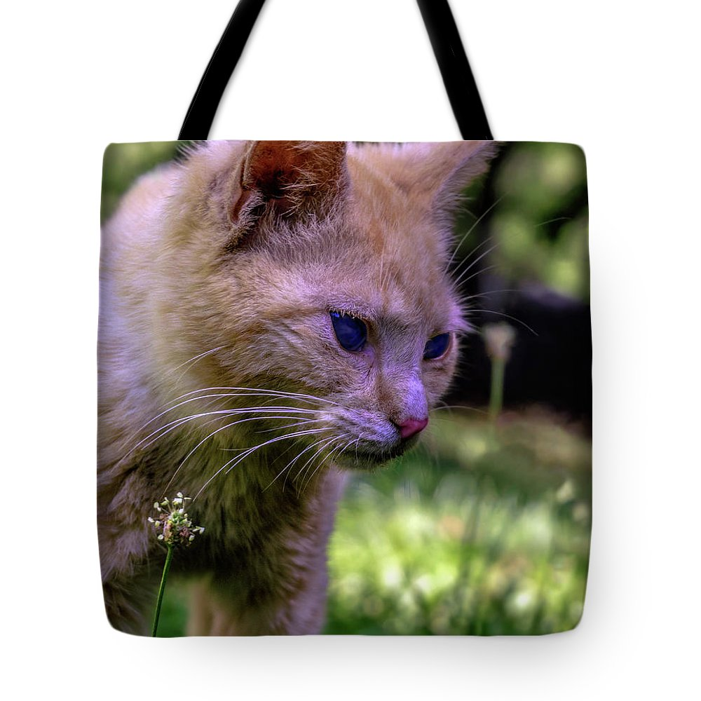 0369b Tote Bag featuring the photograph Skippy Feral Cat Portrait 0369b by Ricardos Creations