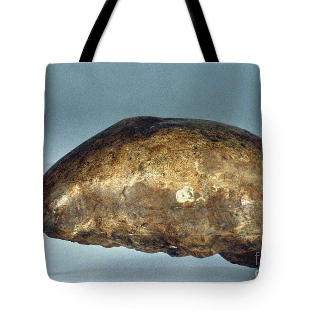 Ancient Tote Bag featuring the photograph Skull Of Java Man by Granger