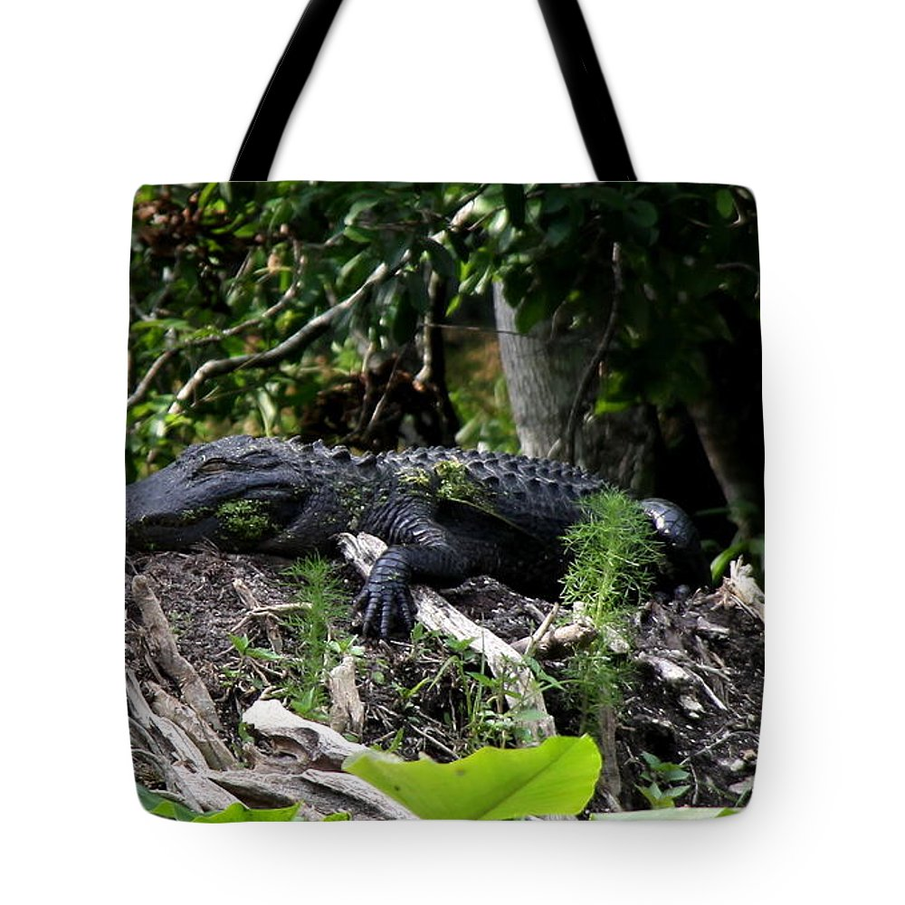 American Alligator Tote Bag featuring the photograph Sleeping Alligator by Barbara Bowen