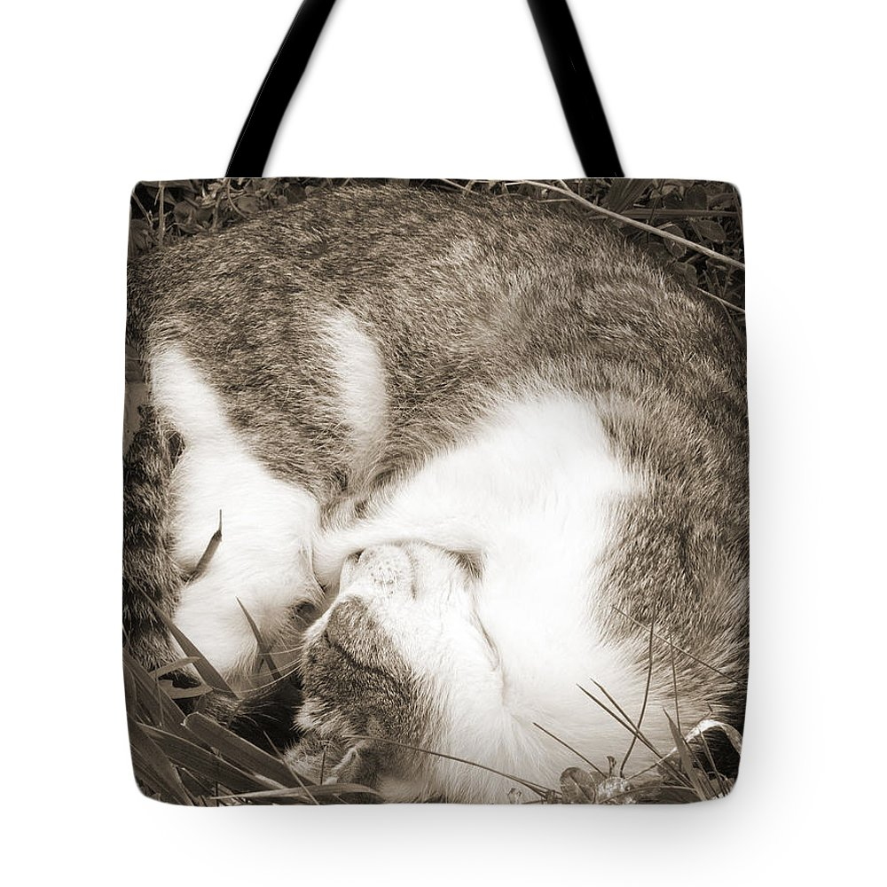 Pets Tote Bag featuring the photograph Sleeping by Daniel Csoka