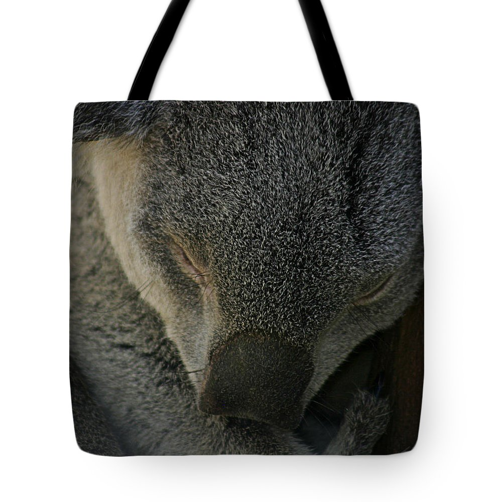 Zoo Tote Bag featuring the photograph Sleeping Koala Bear by Anthony Jones