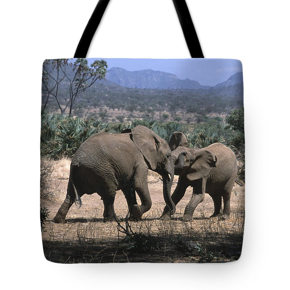 Elephants Tote Bag featuring the photograph Slight Disagreement by Sandra Bronstein