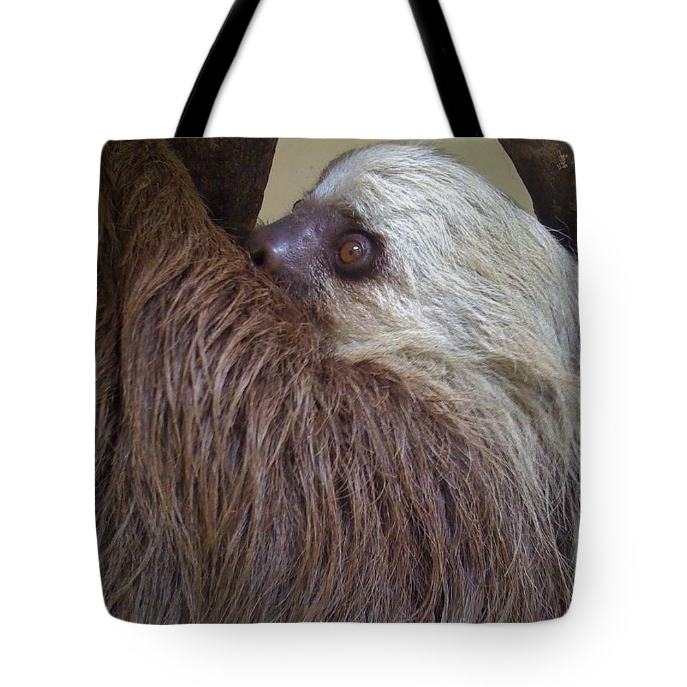Sloth Tote Bag featuring the photograph Sloth by Dolly Sanchez