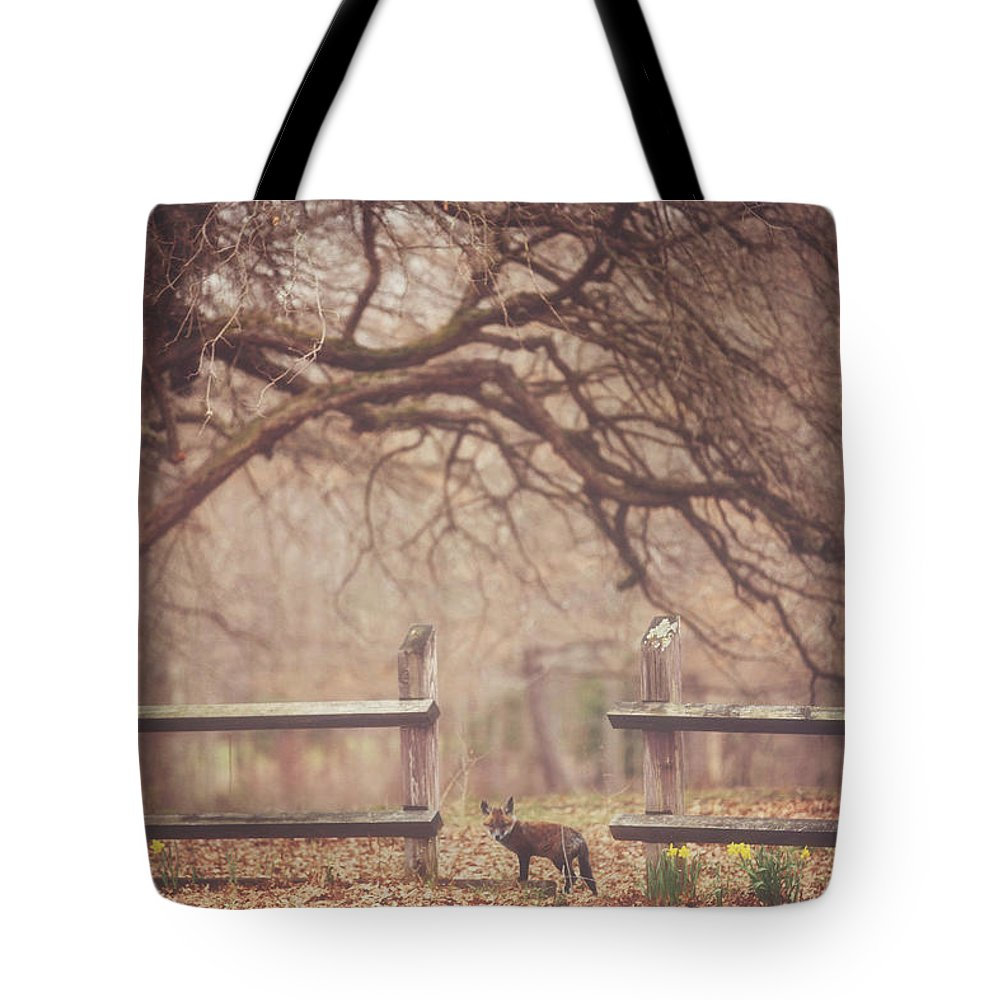 Fox Tote Bag featuring the photograph Sly Guy by Carrie Ann Grippo-Pike