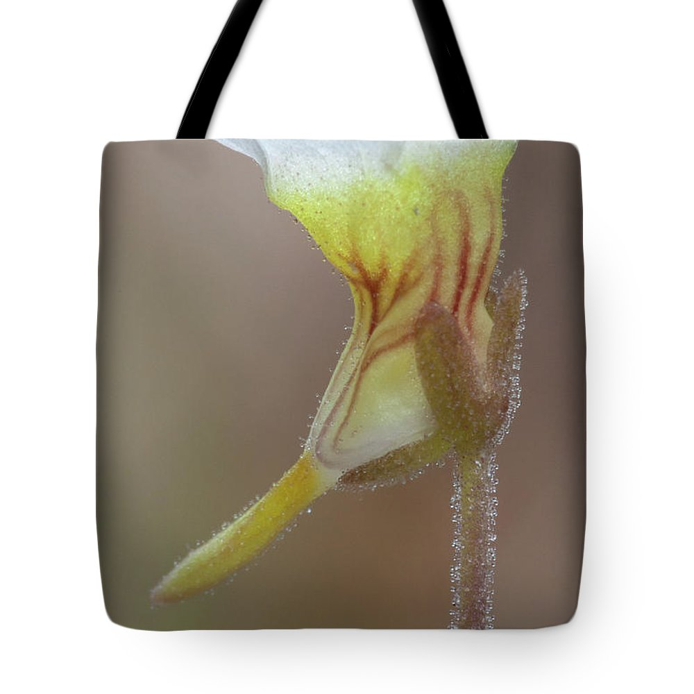 Butterwort Tote Bag featuring the photograph Small Butterwort by Paul Rebmann