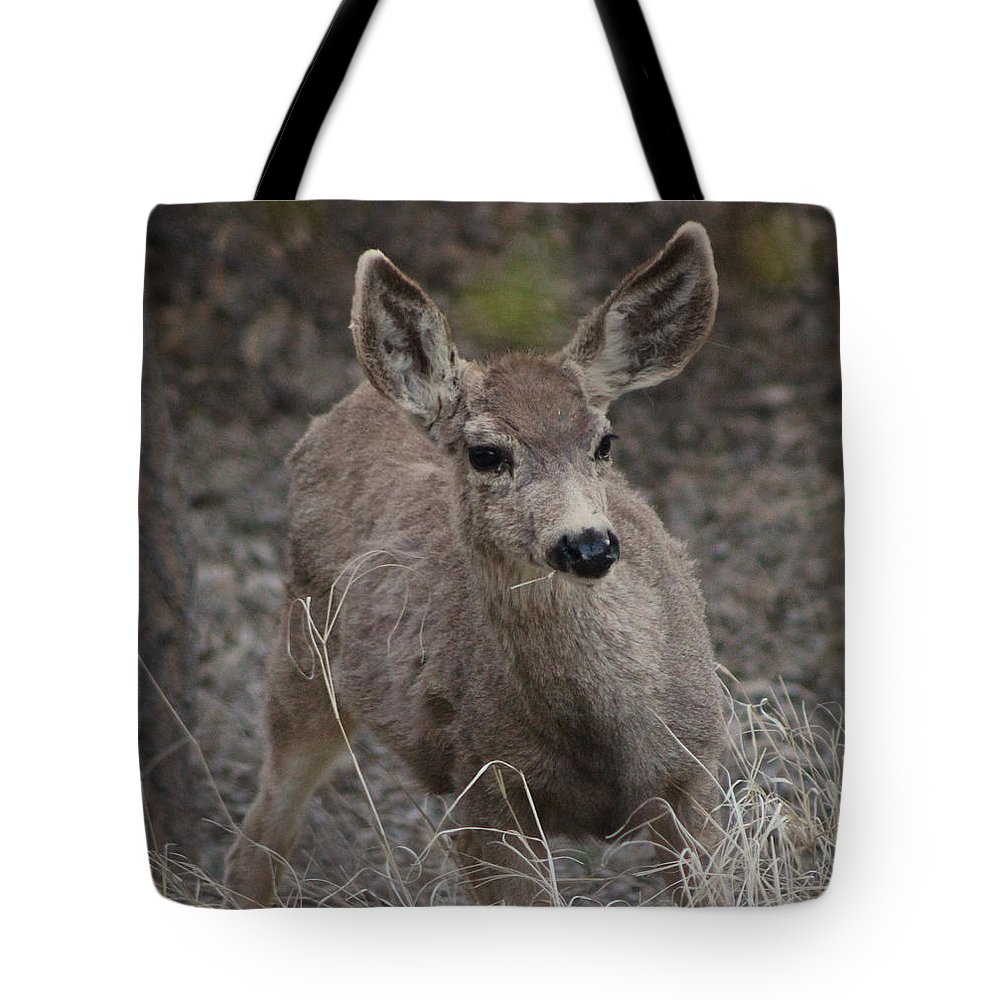 Deer Tote Bag featuring the photograph Small Fawn In Tombstone by Colleen Cornelius