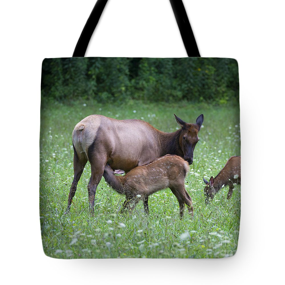 Elk Tote Bag featuring the photograph Smoky Mountain National Park Elk Cow Nursing Calf by Schwartz Nature Images
