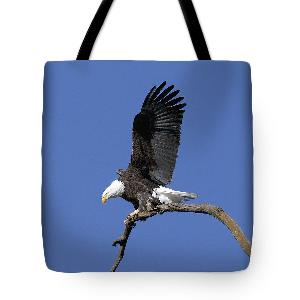 Eagle Tote Bag featuring the photograph Smooth Landing 2 by David Lester