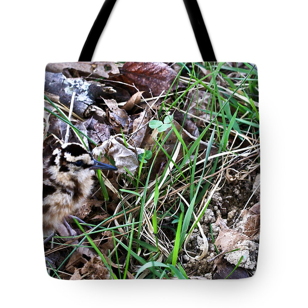 Snipe Tote Bag featuring the photograph Snipe In Camouflage by Douglas Barnett