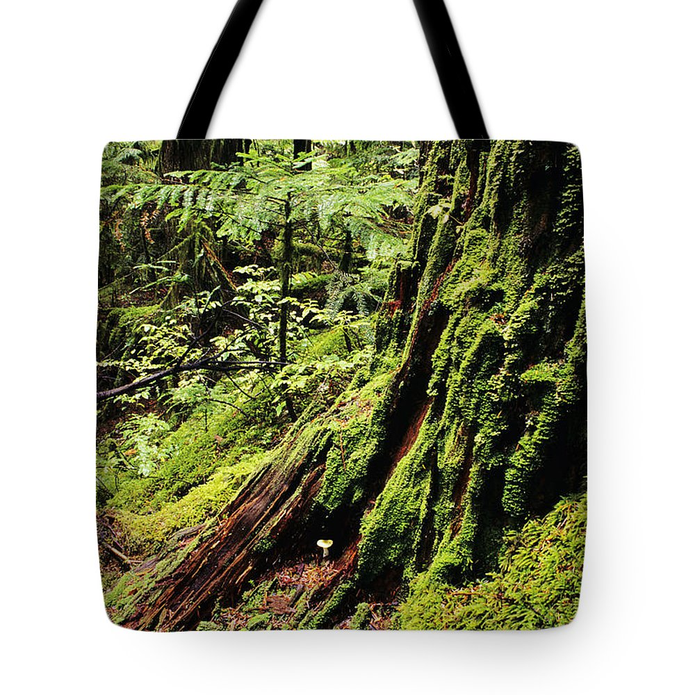 Baker Tote Bag featuring the photograph Snoqualmie National Forest by Greg Vaughn - Printscapes