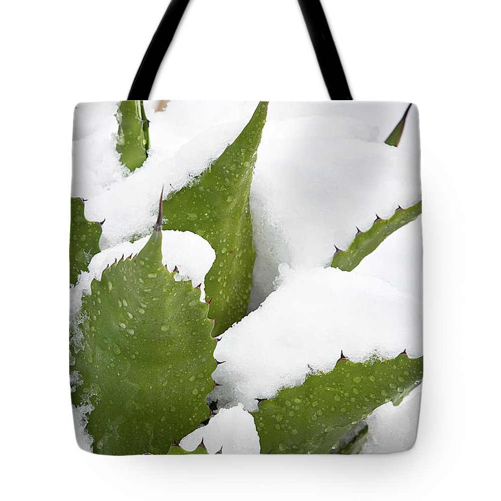 Agave Tote Bag featuring the photograph Snow Covered Agave by Phyllis Denton