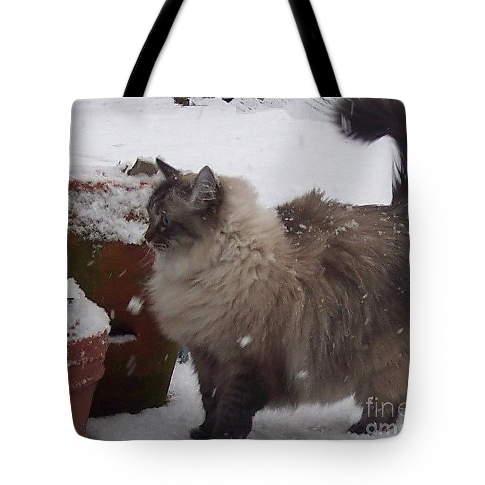 Cats Tote Bag featuring the photograph Snow Kitty by Debbi Granruth
