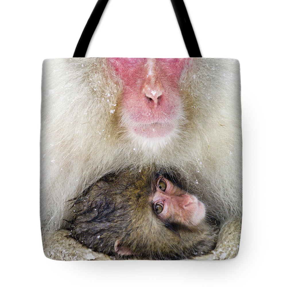 Japan Tote Bag featuring the photograph Snow Monkey Love by Michele Burgess