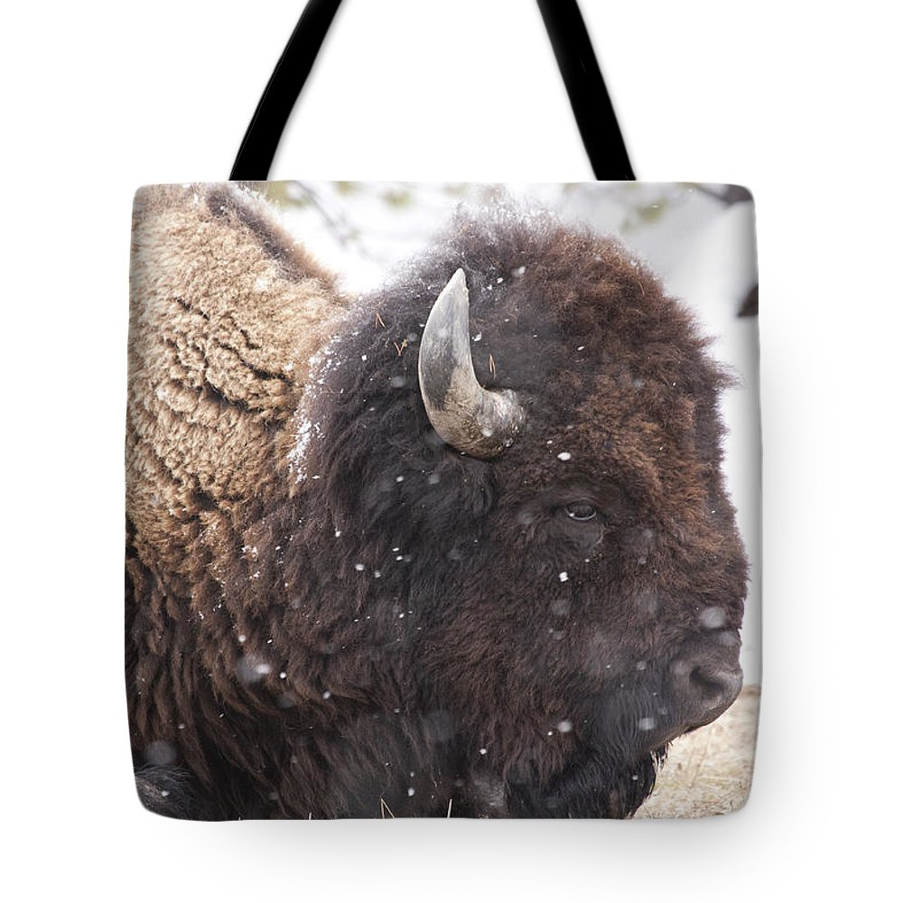 Bison Tote Bag featuring the photograph Snowy Bison by Mary Haber