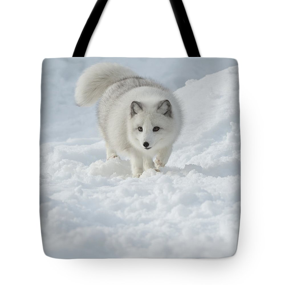 Wildlife Tote Bag featuring the photograph Snowy Day Stroll by Sandra Bronstein