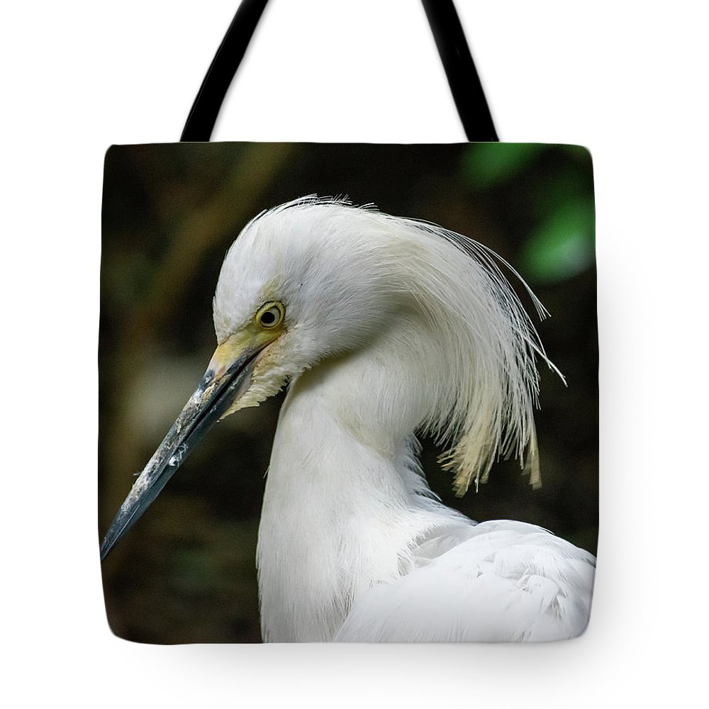 Snowy Egret Tote Bag featuring the photograph Snowy Egret by Aaron Geraud